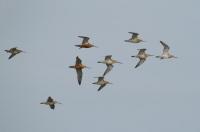 Bild 0 von 4. Zugvogeltage im Nationalpark Niedersächsisches Wattenmeer vom 6. bis 14.10.2012