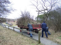 Bild 3 von Zwei Wagen Buschwerk beim Frühjahrsputz