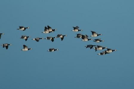 """Bild 0 von """"Alle Vögel sind schon da ..."""" - Ziehen Sie mit!"""