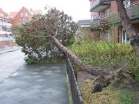 Bild 6 von Orkan richtete auf Juist viel Schaden an