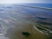 Bild 6 von Bei Ebbe offenbart das Wattenmeer seine Geheimnisse