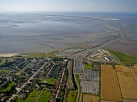 Bild 9 von Bei Ebbe offenbart das Wattenmeer seine Geheimnisse