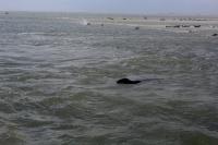 Bild 1 von Seehundbänke sind immer ein beliebtes Ausflugsziel