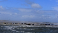 Bild 2 von Seehundbänke sind immer ein beliebtes Ausflugsziel