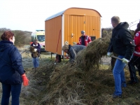 Bild 4 von Juist-Stiftung führte Frühjahrsputz am Goldfischteich durch