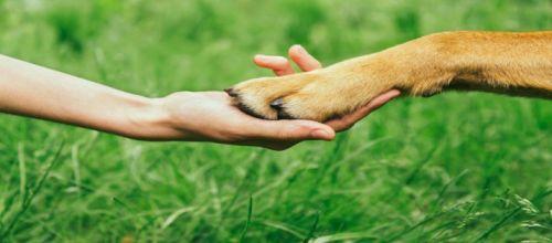 """Bild 0 von Interessengemeinschaft """"Hunde auf Juist"""""""