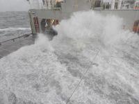 Bild 9 von Erneute Anlandungen von Strandgut auf  Borkum