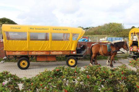 Bild 0 von Rat stellte Weichen für Zukunft der Pferdetaxis zum Flugplatz