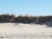 Bild 2 von Kräutertal erleidet großen Schaden durch Küstenschutzmaßnahme