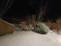 Bild 2 von Endlich fiel auf Juist mal wieder Schnee