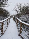 """Bild 1 von Noch mehr """"Juist im Schnee"""""""