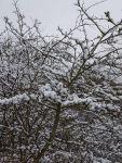 """Bild 7 von Noch mehr """"Juist im Schnee"""""""