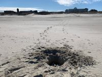Bild 2 von Naturschützer rufen zur Schildkrötenhilfe am Strand auf