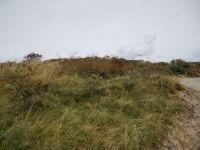 Bild 7 von Herbstspaziergang im Inselosten