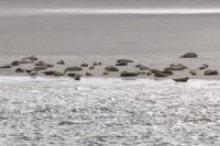 Bild 0 von Seehunde sind keine Kuscheltiere