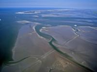 Bild 7 von Bei Ebbe offenbart das Wattenmeer seine Geheimnisse
