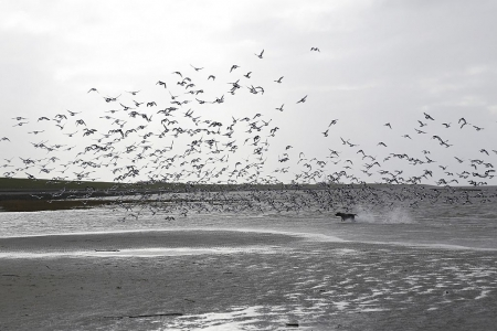 Bild 0 von Beginn der Brutzeit im Wattenmeer