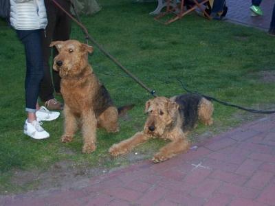 Bild 0 von Leinenzwang am Hundestrand infrage gestellt