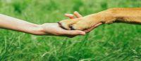 """Bild 0 von Erstes Treffen der Interessengemeinschaft  """"Hunde auf Juist"""""""