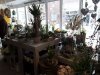 Bild 3 von Ehemalige Bäckerei Habbinga wurde jetzt zum Blumenmeer