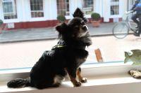 Bild 6 von Pino ist der Liebling in der neuen Aust-Boutique auf Juist