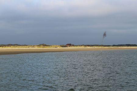 """Bild 0 von Mission """"Wattenmeer"""" zum Weltnaturerbe-Geburtstag auf Juist"""