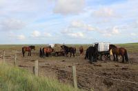 Bild 5 von Rat stellte Weichen für Zukunft der Pferdetaxis zum Flugplatz