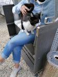 Bild 0 von Wem gehört diese Katze?