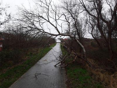 Bild 0 von Kaum Schäden beim letzten Sturm des Jahres