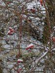 Bild 9 von Endlich fiel auf Juist mal wieder Schnee